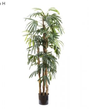 Artificial Raphis Palm 1.7mt 443 lvs and real palm stems