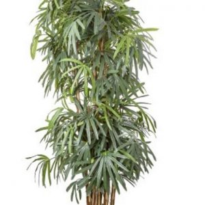 Artificial Raphis Palm 2.4mt on real palm casings