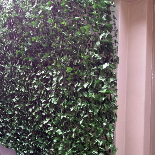 Ivy Wall Interior