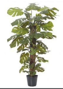 Split leaf Philo - Monstera Totem 120cm