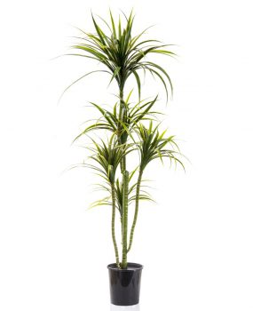 Artificial silk trees and plants supplier of quality for Plante yucca