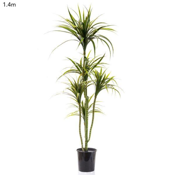 Yucca Plant 1.4mt
