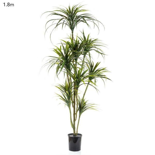 Yucca Tree 1.8mt