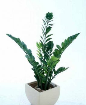 Zanzibar bush 1.1mt – Quality Artificial Plant