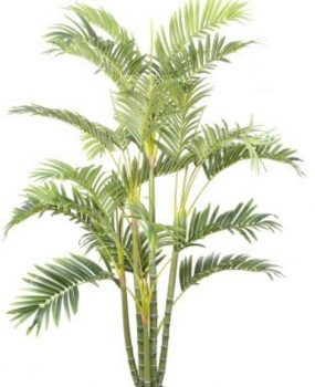 Artificial Golden Cane Palm 1.5mt multi trunks realistic leaves