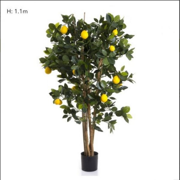 Lemon Tree 110cm