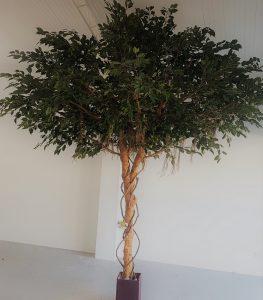 Artificial Ficus Exotica Giant Tree 3mt