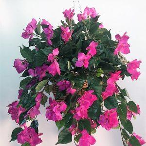 Artificial Bougainvillea Vine Bush purple in cane hanging basket – double