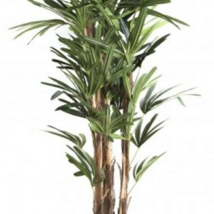 Artificial Raphis Palm 1.5mt 444 lvs real palm trunks