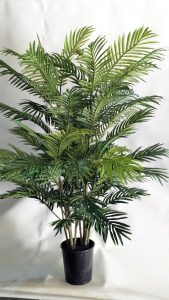 Areca Palm 1.2mt double