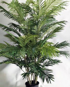 Areca Palm 1.2mt double x 10