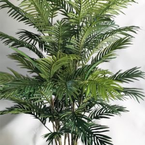 Areca Palm 1.2mt double x 10