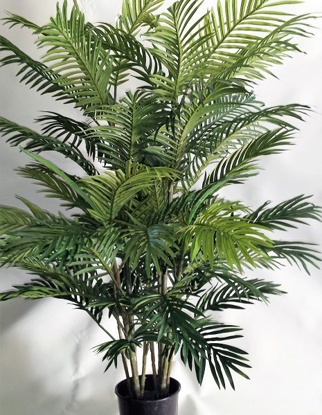 Areca Palm 1.2mt double