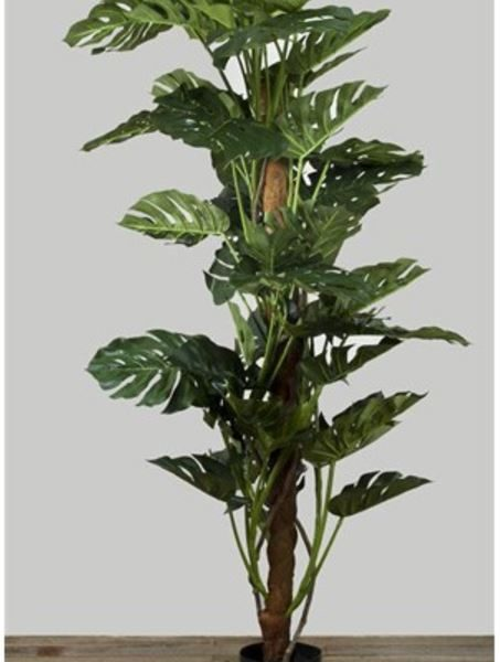 Artificial Split Leaf Philo Monstera Tree 2mt