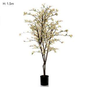 Cherry Blossom Tree 1.5mt