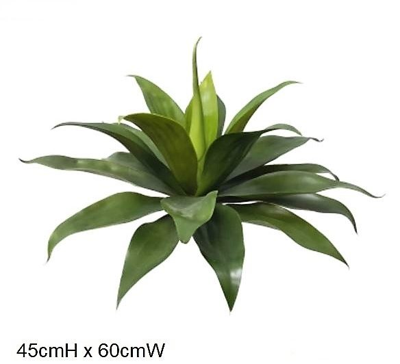 Agave Dk green 50cm