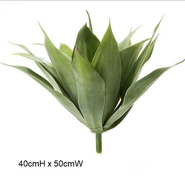 Agave grey 50cm