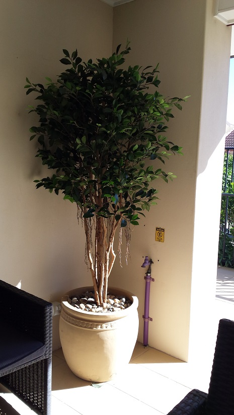 Artificial Ficus Retusa b
