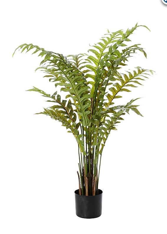 Hares Foot Fern 110cm