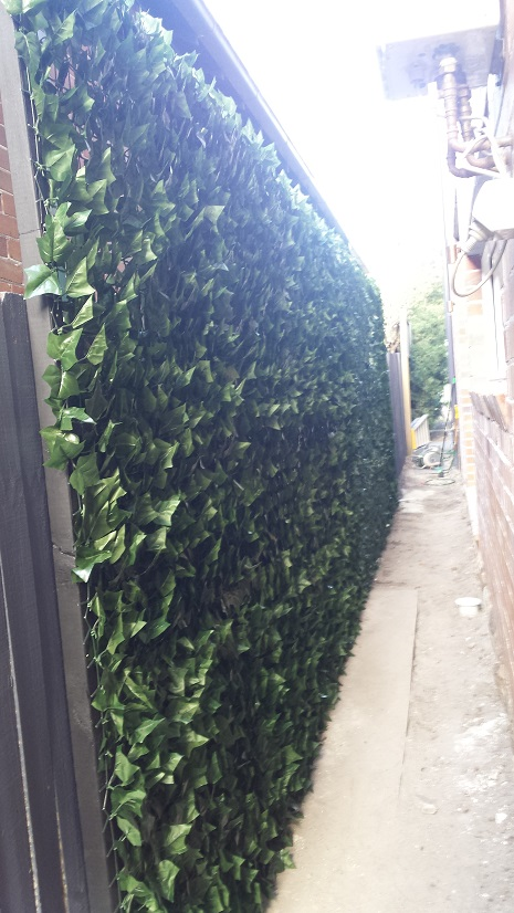 Ivy wall after