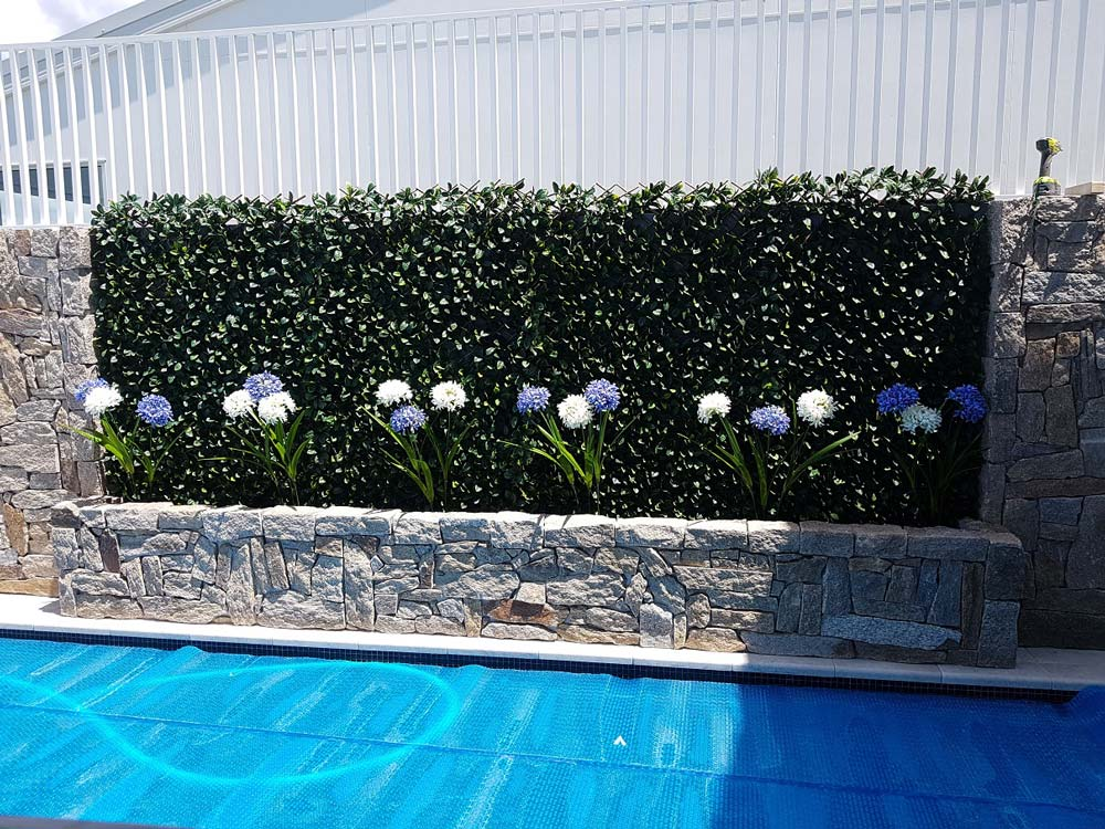 Pool Ivy Wall with White and Blue Agapanthus