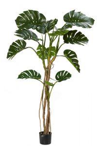 Monsteria Vine Tree