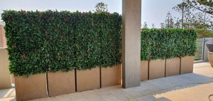 Artificial Photinia Hedge.