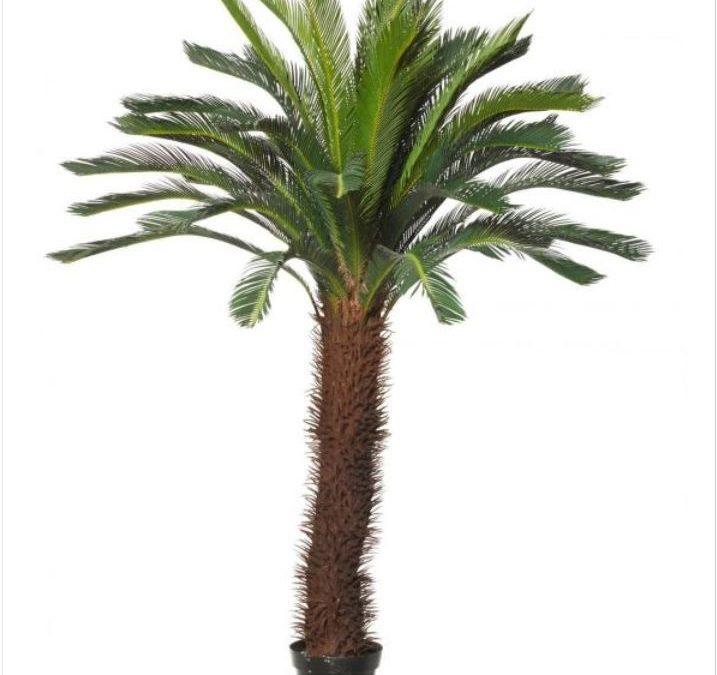 Artificial Giant Cycad Tree 190cm-single Head-Cycus-trees-nsw-au