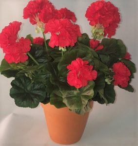 Artificial Geranium Bush Red Double