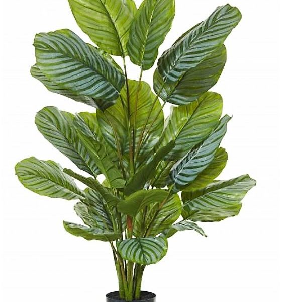 Artificial Calathea Plant 115cm x 22 large round leaves