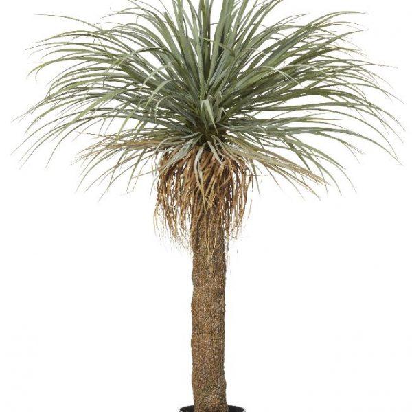 Grass Tree 150cm