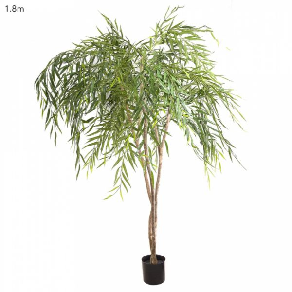Chinese Weeping Willow tree 240cm