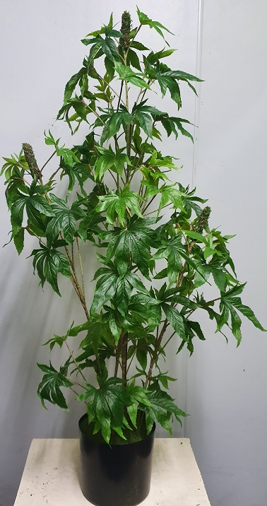 Artificial Marijuana Plant 130cm with buds – fake cannabis marijuana plant