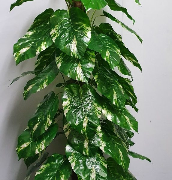 Pothos 150cm x 54 lvs on totem pole