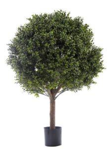 Boxwood Ball Tree 85cm