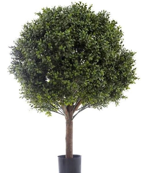 Boxwood Ball Tree 85cm